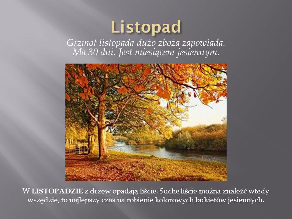 Grzmot listopada dużo zboża zapowiada. Ma 30 dni. Jest miesiącem jesiennym. W LISTOPADZIE z drzew opadają liście. Suche liście można znaleźć wtedy wsz