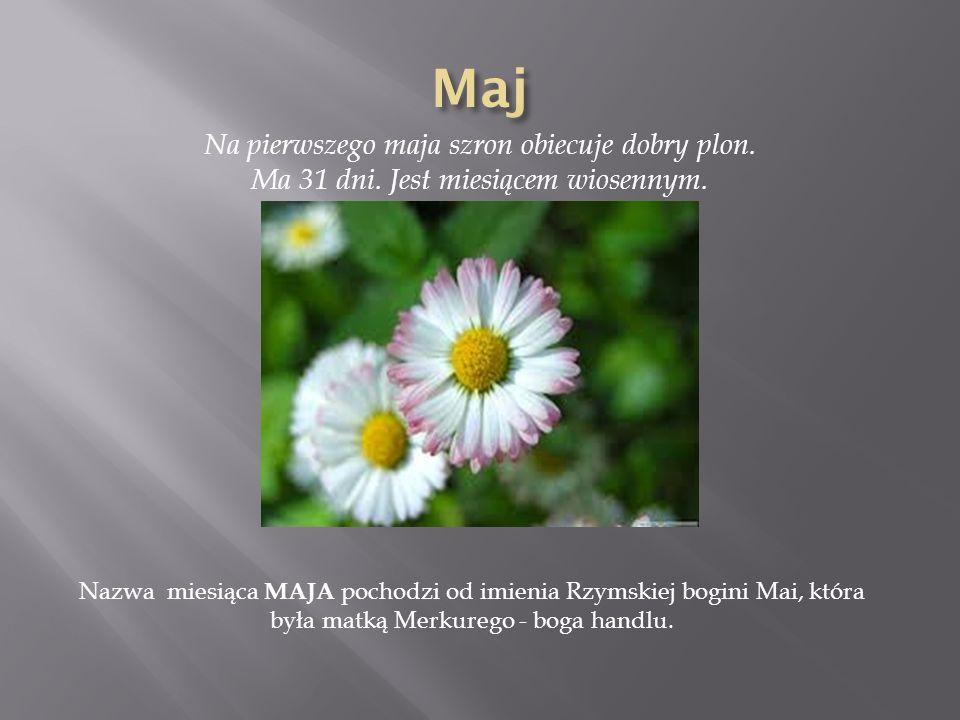 Na pierwszego maja szron obiecuje dobry plon. Ma 31 dni. Jest miesiącem wiosennym. Nazwa miesiąca MAJA pochodzi od imienia Rzymskiej bogini Mai, która