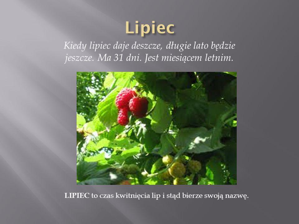 Kiedy lipiec daje deszcze, długie lato będzie jeszcze. Ma 31 dni. Jest miesiącem letnim. LIPIEC to czas kwitnięcia lip i stąd bierze swoją nazwę.