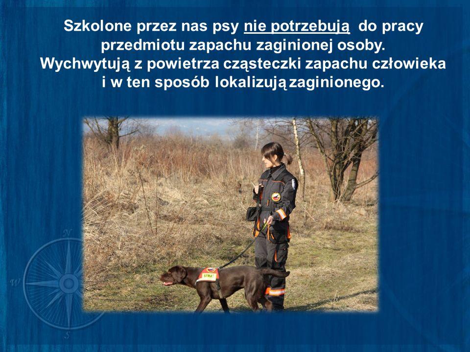 Szkolone przez nas psy nie potrzebują do pracy przedmiotu zapachu zaginionej osoby. Wychwytują z powietrza cząsteczki zapachu człowieka i w ten sposób