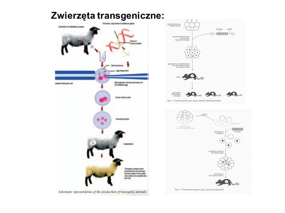 Zwierzęta transgeniczne: