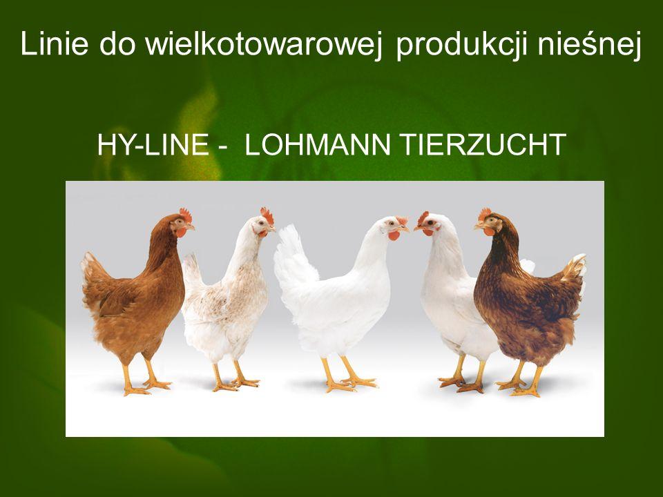 Linie do wielkotowarowej produkcji nieśnej ISA + HENDRIX – POULTRY BREEDERS BOVANS BROWN BOVANS WHITE HISEX WHITE HISEX BROWN SHAVER WHITE SHAVER BROW
