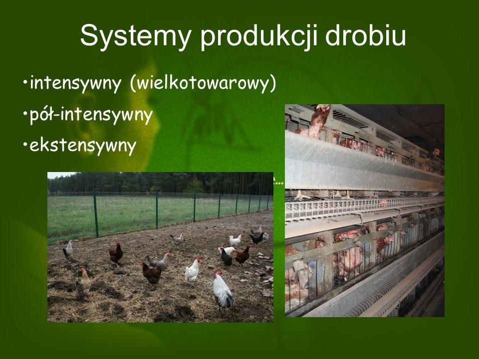 Systemy produkcji drobiu intensywny (wielkotowarowy) pół-intensywny ekstensywny
