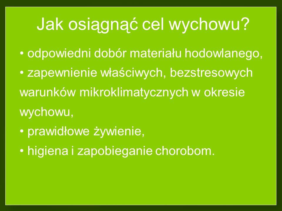 Wyrównanie stada zależy od: jakości wyklutych piskląt i ich genotypu (pisklęta wolno opierzające mają wolniejsze tempo wzrostu i niższe masy ciała), w