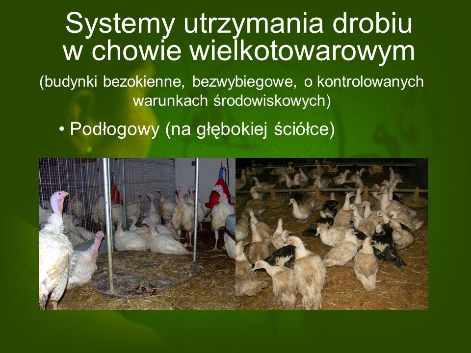 Systemy utrzymania drobiu w chowie wielkotowarowym Podłogowy (na głębokiej ściółce) (budynki bezokienne, bezwybiegowe, o kontrolowanych warunkach środowiskowych)