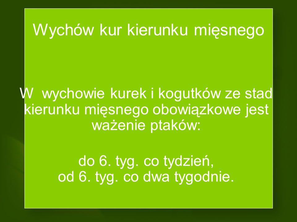Wychów kurek i kogutków stad kierunku nieśnego odbywa się wspólnie (kogutki stanowią 12-13%). Wychów kurek i kogutków stad kierunku mięsnego odbywa si