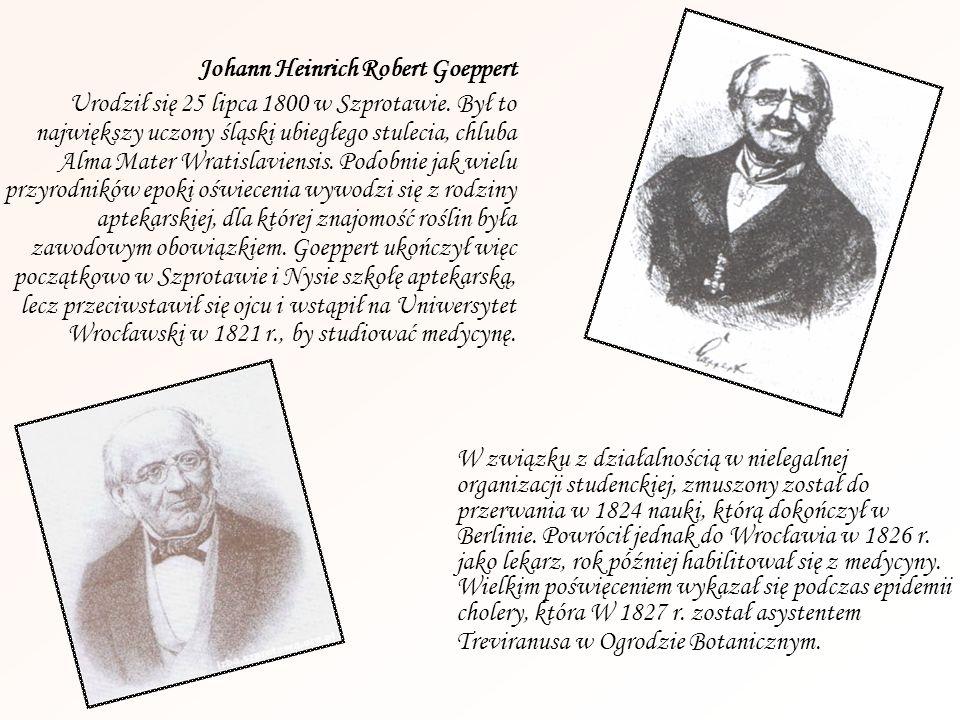 Johann Heinrich Robert Goeppert Urodził się 25 lipca 1800 w Szprotawie. Był to największy uczony śląski ubiegłego stulecia, chluba Alma Mater Wratisla