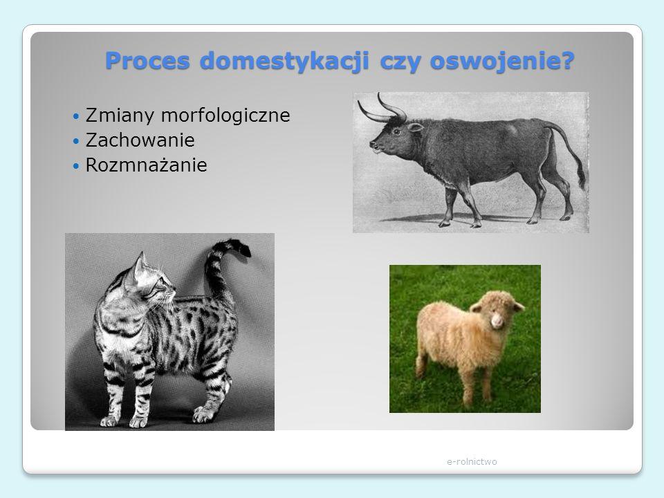 Proces domestykacji czy oswojenie? Zmiany morfologiczne Zachowanie Rozmnażanie e-rolnictwo