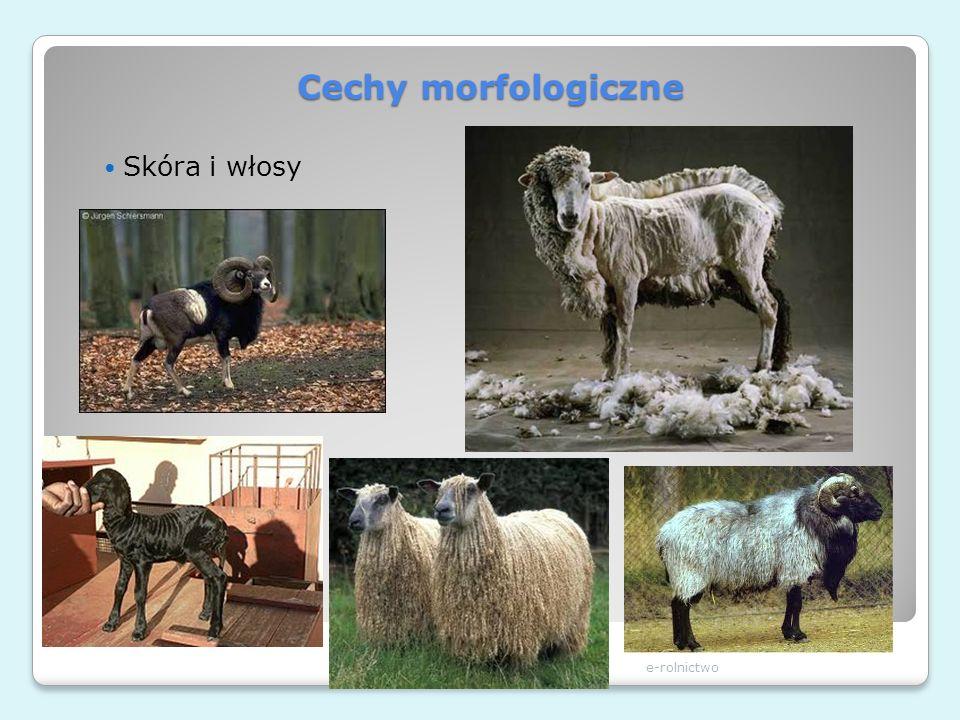 Cechy morfologiczne Skóra i włosy e-rolnictwo