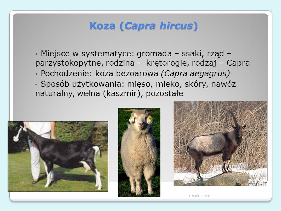 Koza (Capra hircus) e-rolnictwo Miejsce w systematyce: gromada – ssaki, rząd – parzystokopytne, rodzina - krętorogie, rodzaj – Capra Pochodzenie: koza