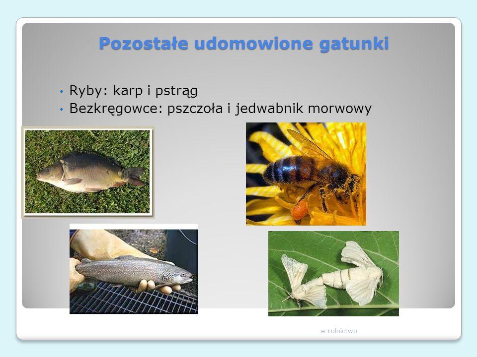 Pozostałe udomowione gatunki e-rolnictwo Ryby: karp i pstrąg Bezkręgowce: pszczoła i jedwabnik morwowy