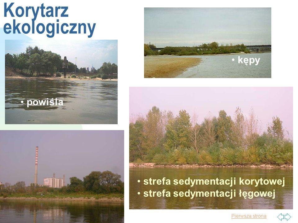 Pierwsza strona Wezbrania www.kasprzak.waw.pl/galeria_wisla