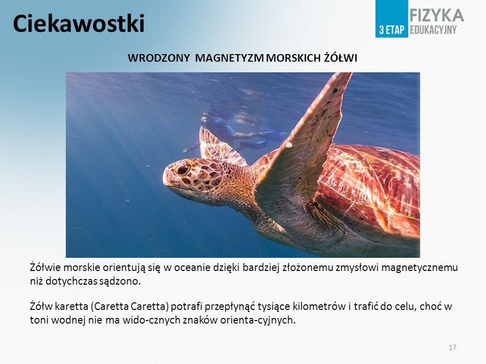 Ciekawostki Żółwie morskie orientują się w oceanie dzięki bardziej złożonemu zmysłowi magnetycznemu niż dotychczas sądzono. Żółw karetta (Caretta Care