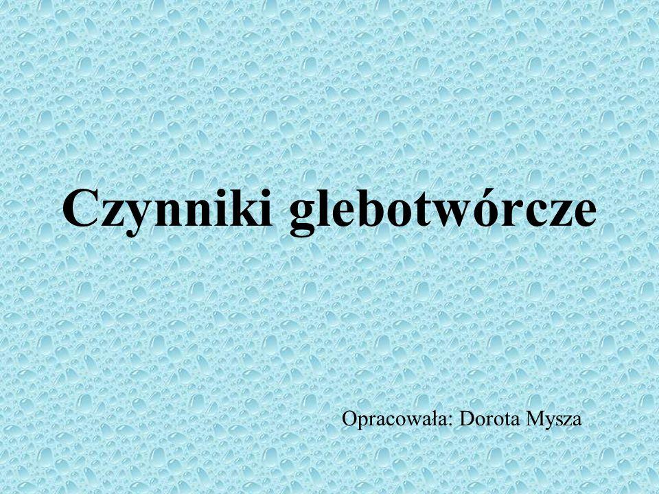 http://gleby2004.w.interia.pl/index.htm