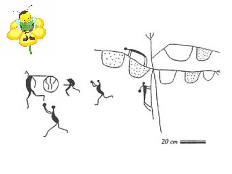 Gniazdo Apis indica zbudowane z wielu plastrów zakłada w pomieszczeniu zamkniętym.