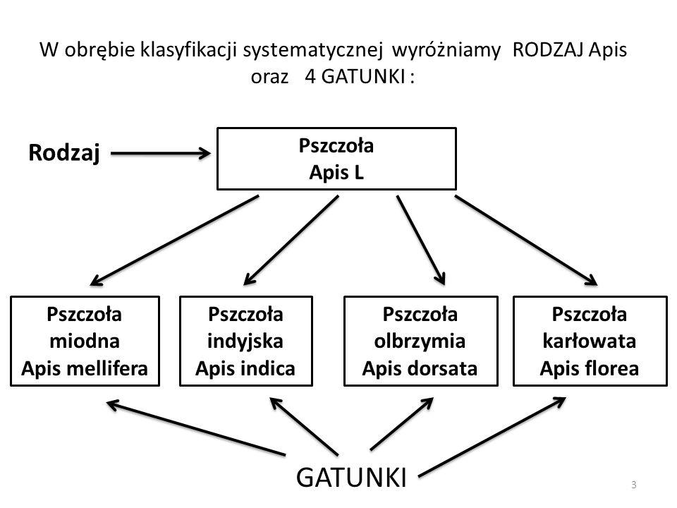Gąsienice ( larwy ) Mklika mącznego mają zdolność trawienia enzymatycznego plastiku.