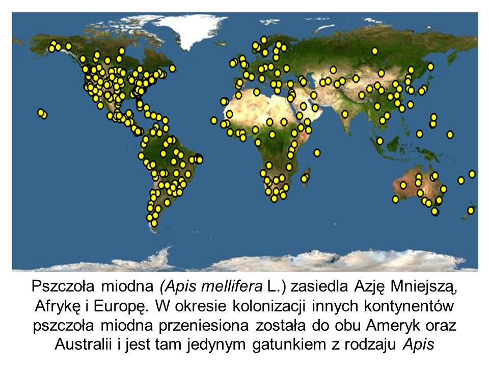 Pszczoła miodna (Apis mellifera L.) zasiedla Azję Mniejszą, Afrykę i Europę. W okresie kolonizacji innych kontynentów pszczoła miodna przeniesiona zos