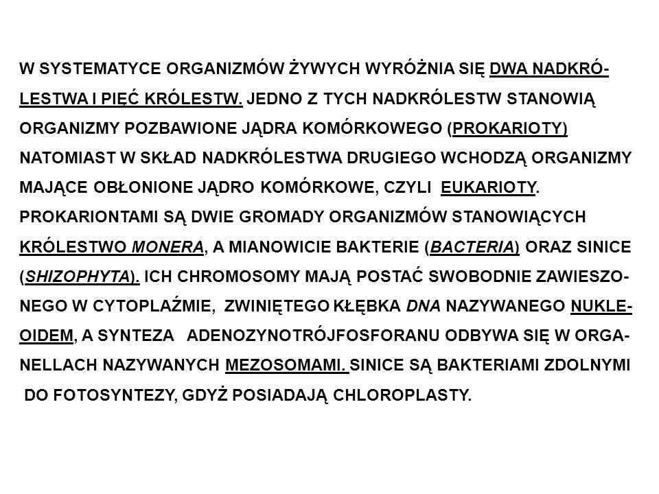 PIĘĆ KRÓLESTW ORGANIZMÓW: 1.MONERA – BAKTERIE I SINICE (prokarionty).