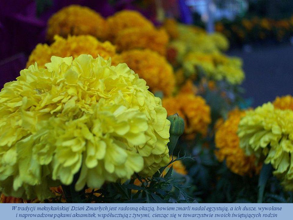 Najpowszechniejszym kwiatem święta jest rodzima meksykańska aksamitka wzniesiona (cempaxóchitl, cempasúchil lub cempazúchil – Tagetes erecta, turek),