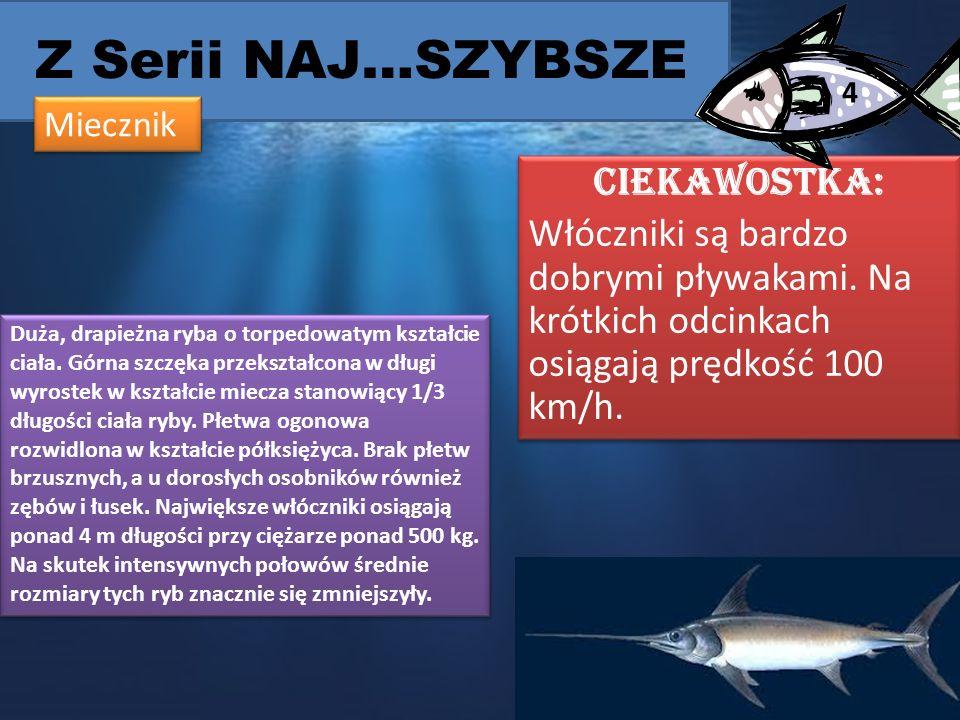 Z Serii NAJ…SZYBSZE CIEKAWOSTKA: Włóczniki są bardzo dobrymi pływakami.