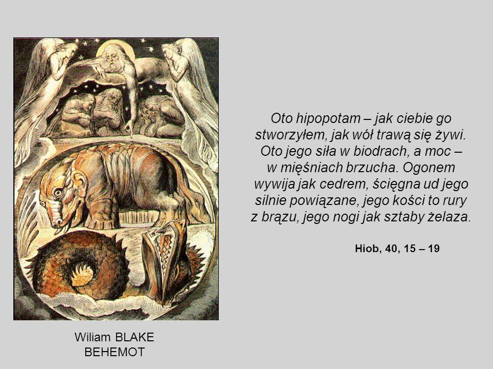 Oto hipopotam – jak ciebie go stworzyłem, jak wół trawą się żywi. Oto jego siła w biodrach, a moc – w mięśniach brzucha. Ogonem wywija jak cedrem, ści