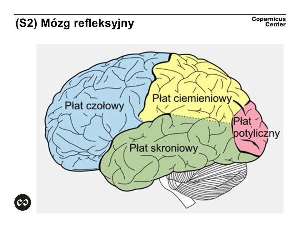 (S2) Mózg refleksyjny