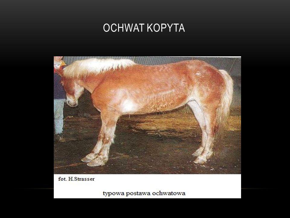 OCHWAT KOPYTA