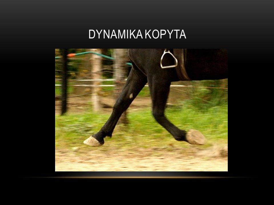 DYNAMIKA KOPYTA