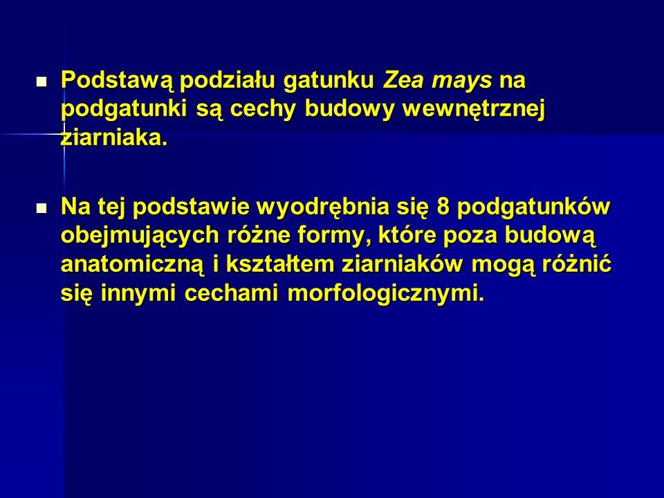 Ważną cechą określającą wartość gospodarczą mieszańców kukurydzy i wyznaczającą kierunki ich użytkowania w Polsce jest wczesność dojrzewania.