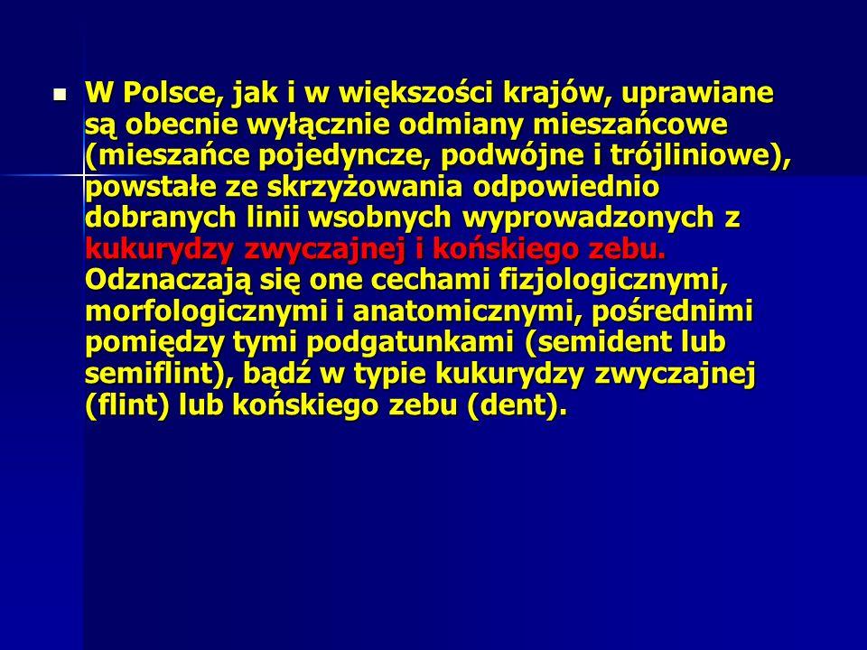 W Polsce, jak i w większości krajów, uprawiane są obecnie wyłącznie odmiany mieszańcowe (mieszańce pojedyncze, podwójne i trójliniowe), powstałe ze skrzyżowania odpowiednio dobranych linii wsobnych wyprowadzonych z kukurydzy zwyczajnej i końskiego zebu.