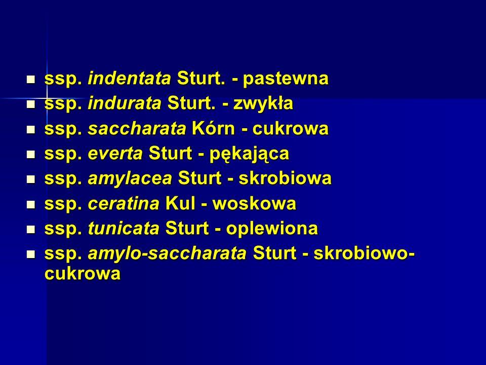 Skład chemiczny ziarna prosa: Skład chemiczny ziarna prosa: węglowodany ok.