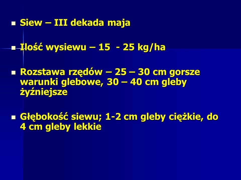 Siew – III dekada maja Siew – III dekada maja Ilość wysiewu – 15 - 25 kg/ha Ilość wysiewu – 15 - 25 kg/ha Rozstawa rzędów – 25 – 30 cm gorsze warunki glebowe, 30 – 40 cm gleby żyźniejsze Rozstawa rzędów – 25 – 30 cm gorsze warunki glebowe, 30 – 40 cm gleby żyźniejsze Głębokość siewu; 1-2 cm gleby ciężkie, do 4 cm gleby lekkie Głębokość siewu; 1-2 cm gleby ciężkie, do 4 cm gleby lekkie