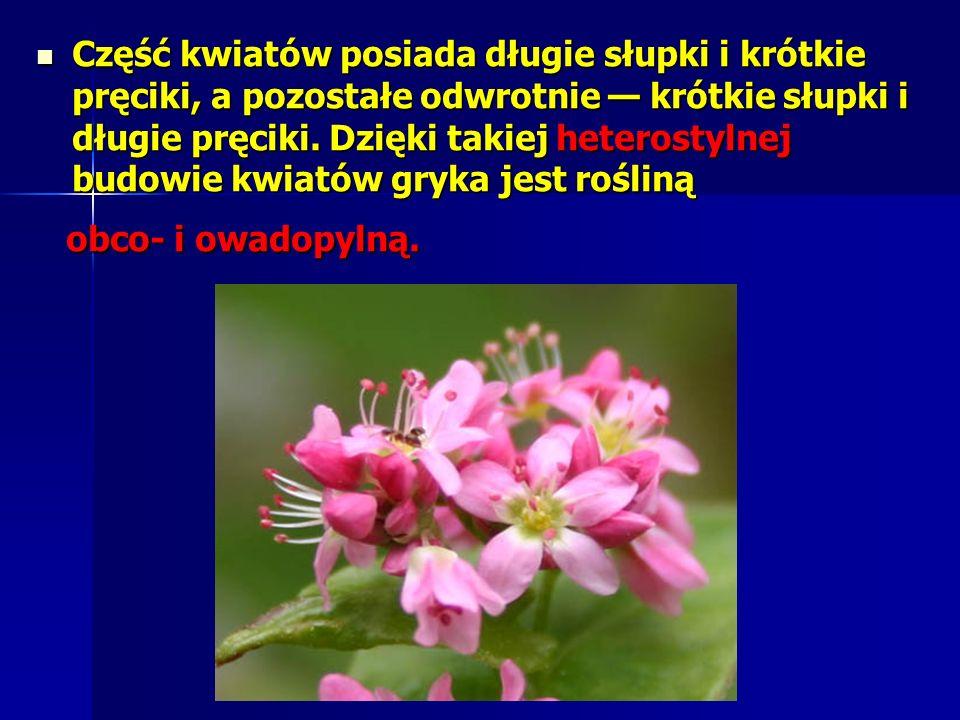 Część kwiatów posiada długie słupki i krótkie pręciki, a pozostałe odwrotnie krótkie słupki i długie pręciki.