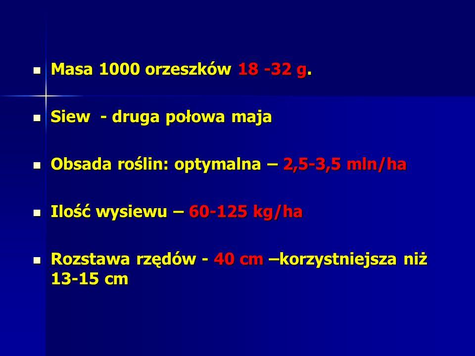 Masa 1000 orzeszków 18 -32 g.Masa 1000 orzeszków 18 -32 g.