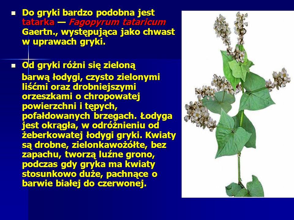 Do gryki bardzo podobna jest tatarka Fagopyrum tataricum Gaertn., występująca jako chwast w uprawach gryki.