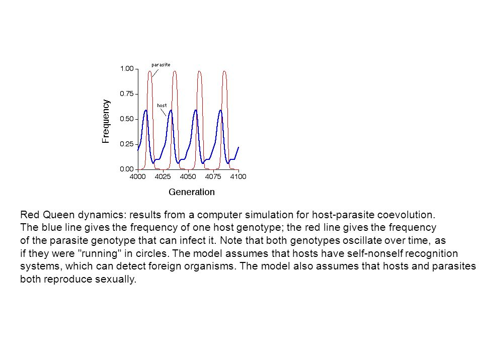 Red Queen dynamics: results from a computer simulation for host-parasite coevolution. The blue line gives the frequency of one host genotype; the red
