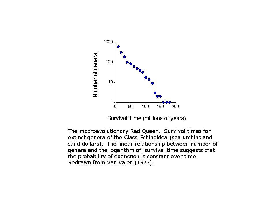 Wiercenia podmorskie – osady zawierają zapis zmian składu gatunkowego organizmów pelagicznych w ciągu kilkudziesięciu milionów lat.