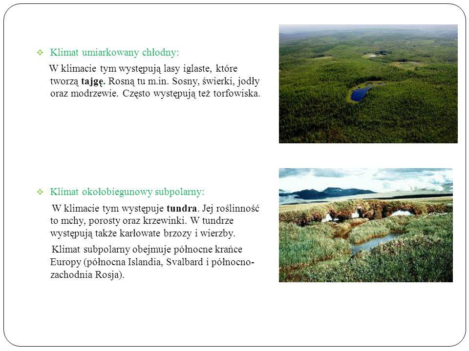 Klimat umiarkowany chłodny: W klimacie tym występują lasy iglaste, które tworzą tajgę.