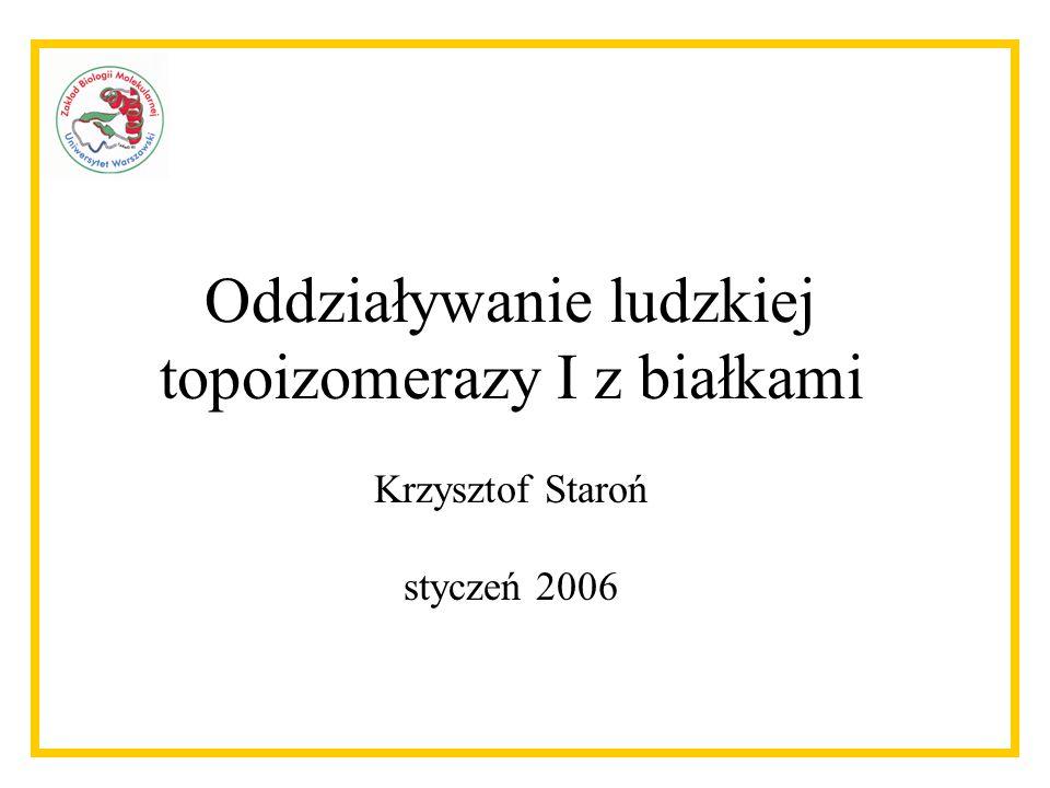 Oddziaływanie ludzkiej topoizomerazy I z białkami Krzysztof Staroń styczeń 2006