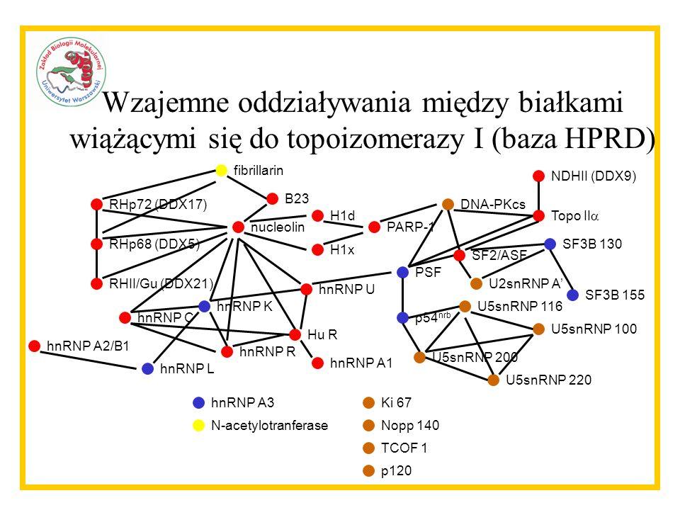 PARP-1 hnRNP A3 nucleolin fibrillarin RHp72 (DDX17) RHp68 (DDX5) RHII/Gu (DDX21) hnRNP U B23 H1d H1x hnRNP A1 hnRNP C hnRNP K hnRNP L hnRNP A2/B1 Hu R hnRNP R PSF DNA-PKcs NDHII (DDX9) Topo II SF2/ASF p54 nrb U5snRNP 116 U5snRNP 100 U5snRNP 200 U5snRNP 220 SF3B 155 SF3B 130 U2snRNP A Ki 67 Nopp 140 TCOF 1 p120 N-acetylotranferase Wzajemne oddziaływania między białkami wiążącymi się do topoizomerazy I (baza HPRD)