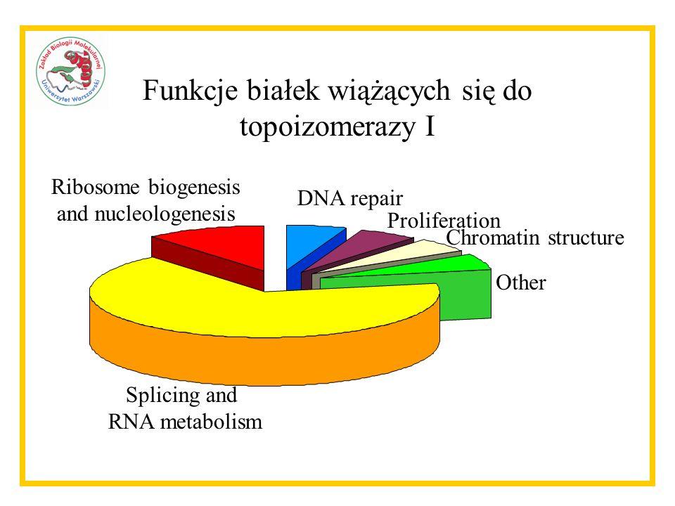 Splicing and RNA metabolism Ribosome biogenesis and nucleologenesis DNA repair Proliferation Chromatin structure Other Funkcje białek wiążących się do topoizomerazy I