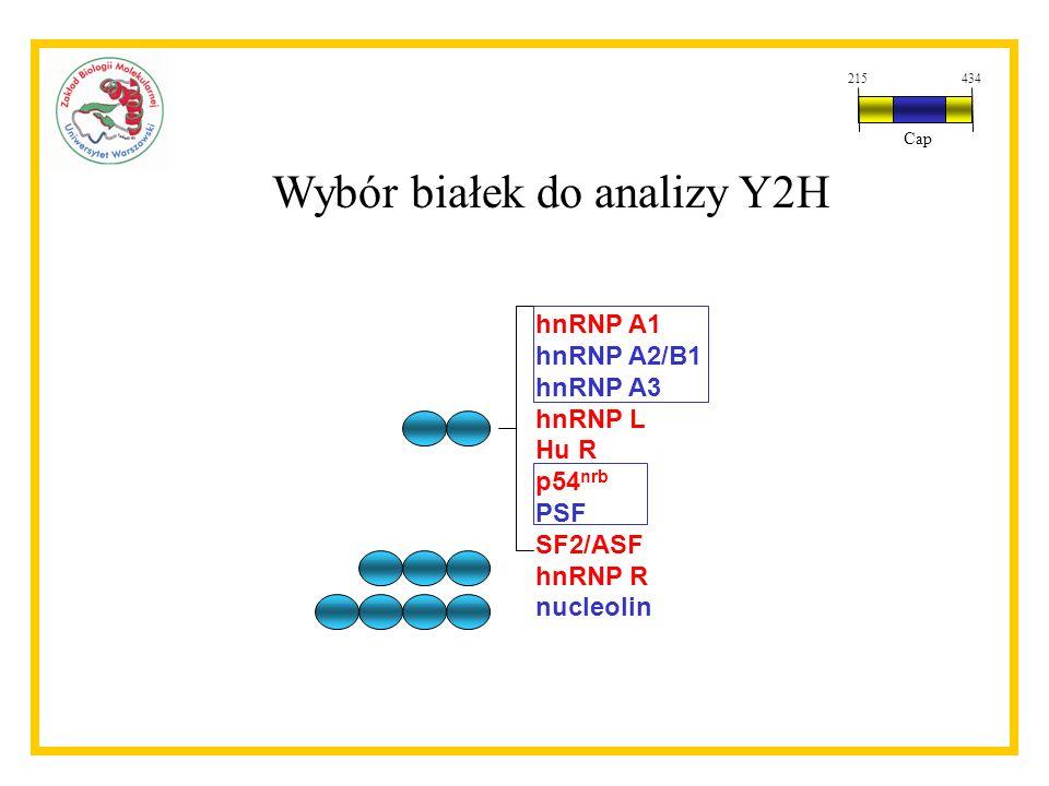 Wybór białek do analizy Y2H hnRNP A1 hnRNP A2/B1 hnRNP A3 hnRNP L Hu R p54 nrb PSF SF2/ASF hnRNP R nucleolin 215434 Cap