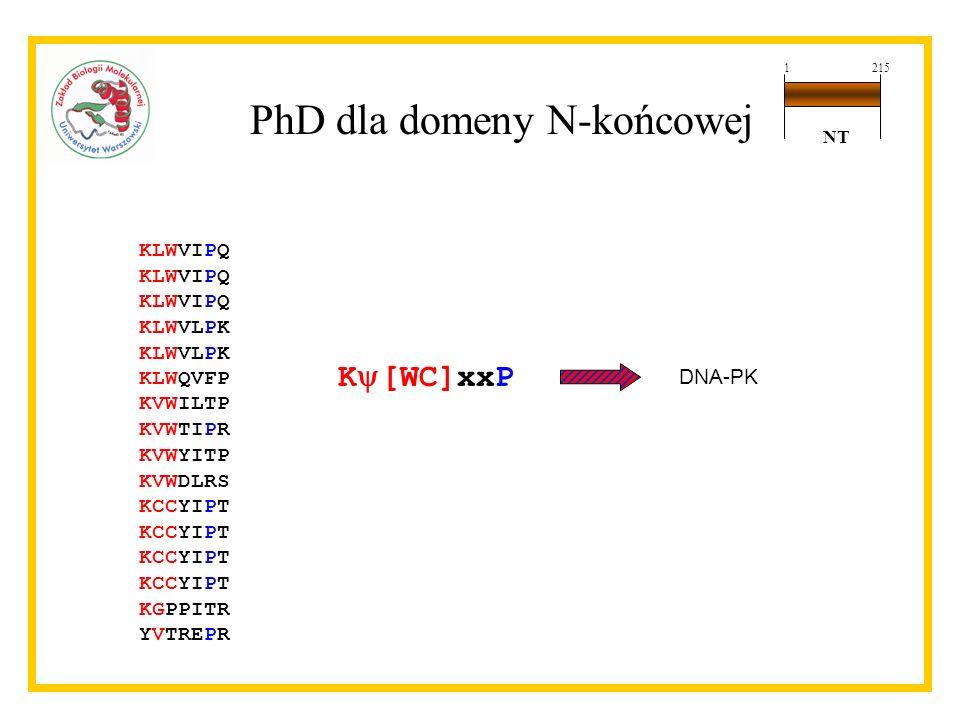 KLWVIPQ KLWVLPK KLWQVFP KVWILTP KVWTIPR KVWYITP KVWDLRS KCCYIPT KGPPITR YVTREPR K [WC]xxP DNA-PK PhD dla domeny N-końcowej 1215 NT