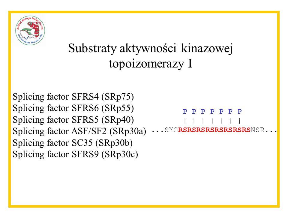 Fosforylacja H Relaksacja Wzajemne hamowanie aktywności topoizomerazy I przez substraty obu reakcji 215434 Cap SF2/ASF + camptothecin- DNA CPT