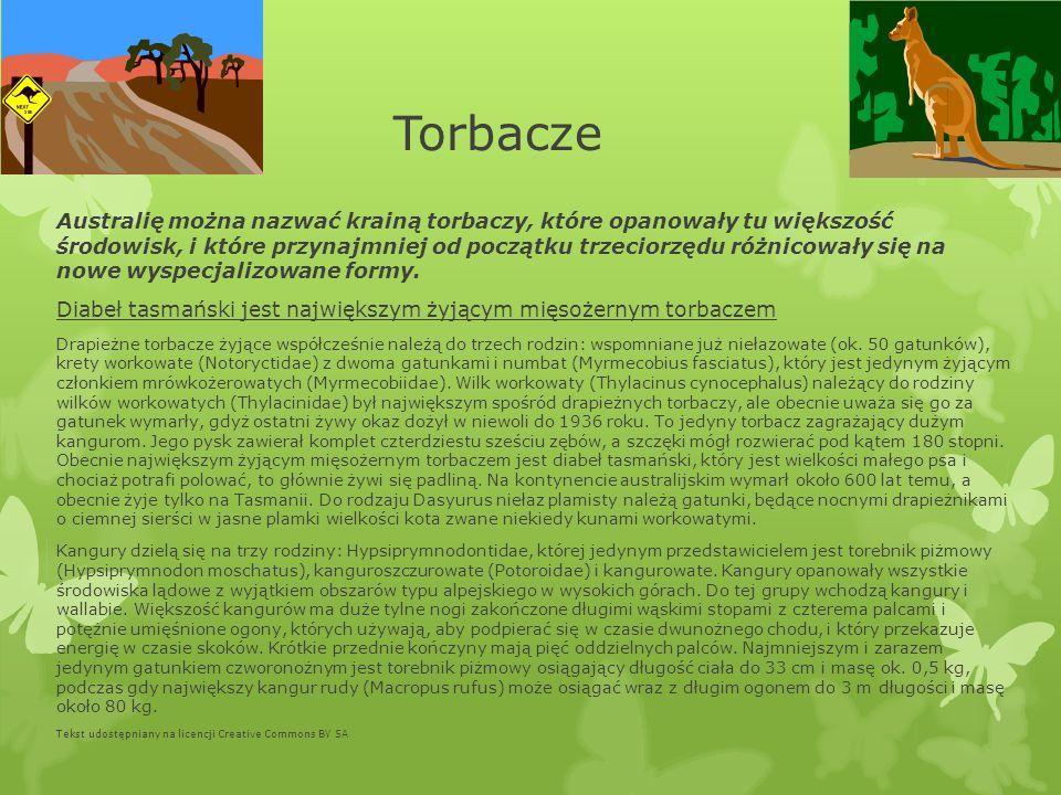 Torbacze Australię można nazwać krainą torbaczy, które opanowały tu większość środowisk, i które przynajmniej od początku trzeciorzędu różnicowały się