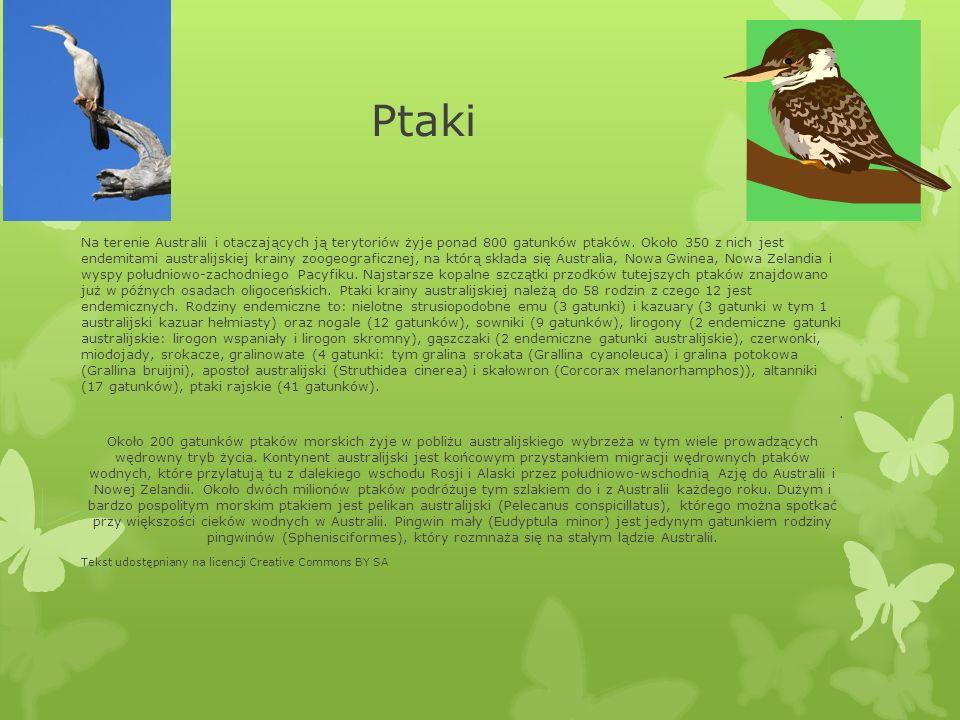Ptaki Na terenie Australii i otaczających ją terytoriów żyje ponad 800 gatunków ptaków. Około 350 z nich jest endemitami australijskiej krainy zoogeog