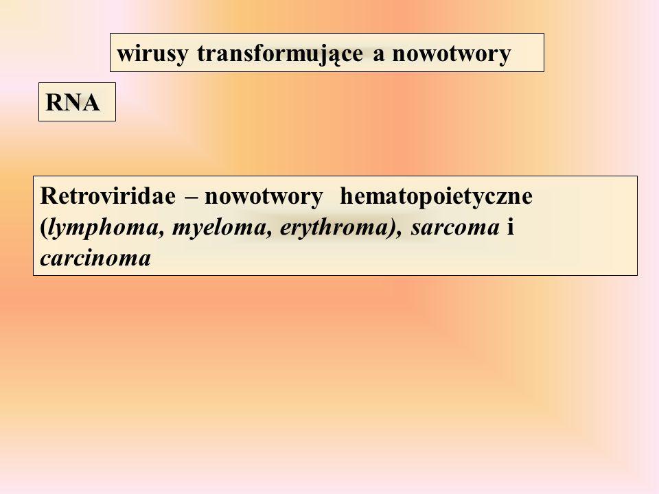 wirusy transformujące a nowotwory RNA Retroviridae – nowotwory hematopoietyczne (lymphoma, myeloma, erythroma), sarcoma i carcinoma