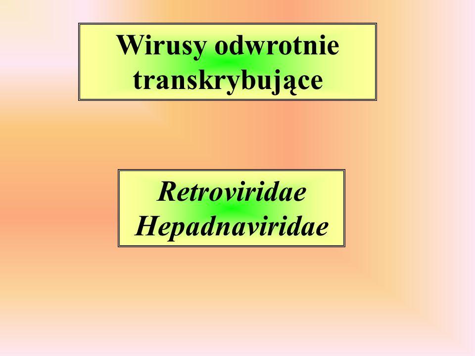 V-onc Sis - czynnik wzrostowy Erb, Fms, Kit, Ros - białka membranowe o srukturze receptorów dla czynnika wzrostu Src, Abl, Yes - membranowe kinazy tyrozynowe Ras - białko G transdukujące sygnały Jun, Fos, Myc - białka jądrowe - czynniki transkrypcyjne