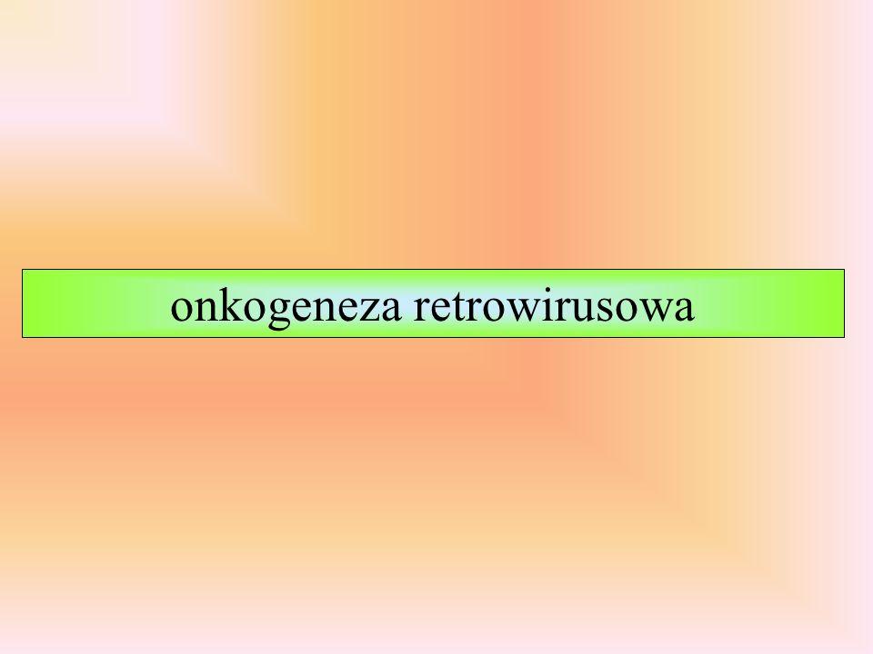 Rodzina: Retroviridae Rodzaj: Alpharetrovirus Betaretrovirus Gammaretrovirus Deltaretrovirus Epsilonretrovirus Lentivirus Spumavirus