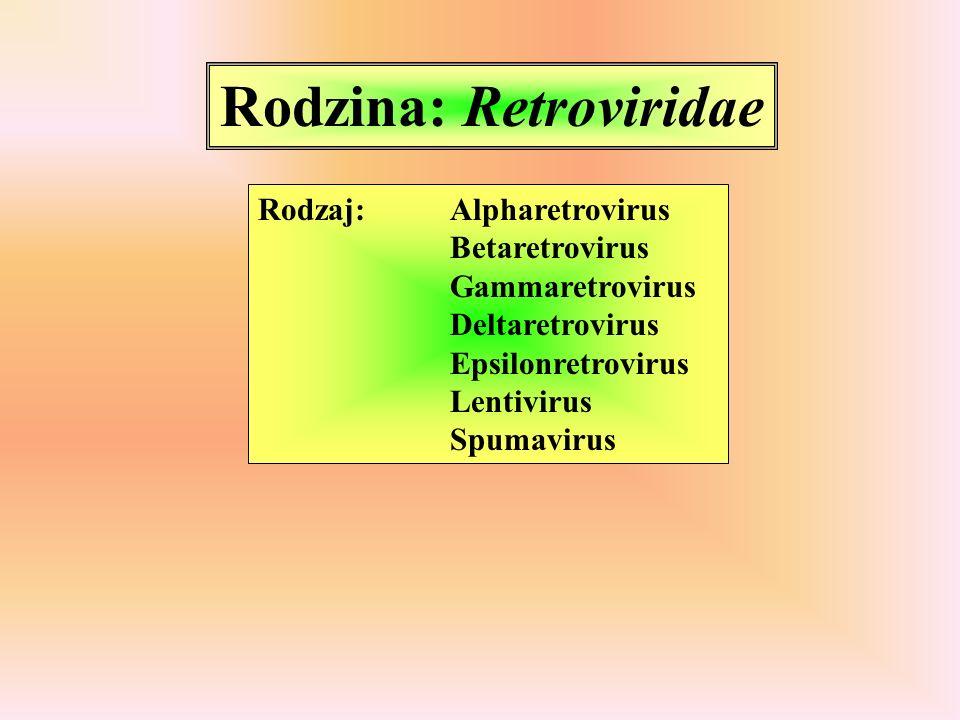 Rodzina: Retroviridae Rodzaj: Alpharetrovirus (avian type C) wirus białaczki ptaków wirus mieloblastozy ptaków wirus mięsaka Rousa Rodzaj: Gammaretrovirus (mammalian type C) wirus białaczki kotów Rodzaj: Betaretrovirus wirus gruczolakowatości płuc owiec